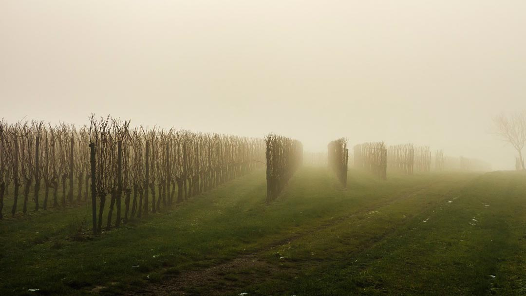 Guiado GPS agricola viñedo